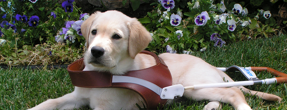 Guide Dogs for the Blind Planned Giving banner 7